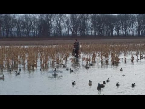 Southern Illinois Duck Hunting SNEAK PEEK PREVIEW Mississipi River action 1-10-17