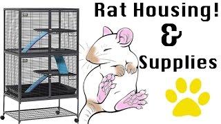 Pet Rat Care - Housing & Extras