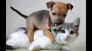 Лучшие приколы про собак и кошек Подборка видео приколов про милых котиков и собак