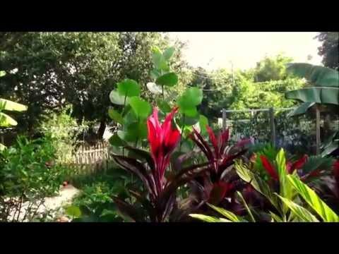 My Sub-Tropical Cottage Garden