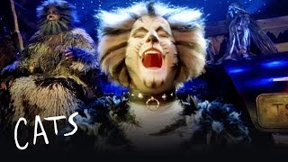 The Battle of Pekes and the Pollicles Part 1 | Cats the Musical
