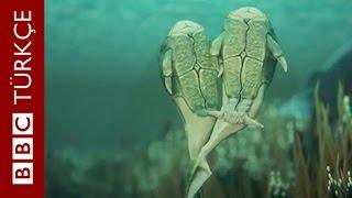 385 milyon yıl önceki ilk cinsel ilişki - BBC TÜRKÇE