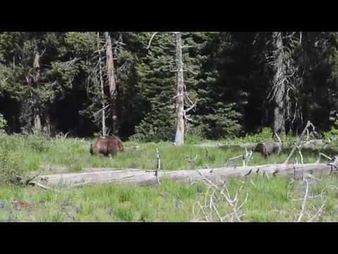 Team Deda Goes To Wyoming (Honeymoon)