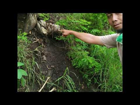 penemuan mayat di gunung budheg tulungagung