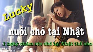 #6 Nuôi chó tại Nhật Bản - Một ngày chăm sóc chó | Cuộc sống Nhật Bản