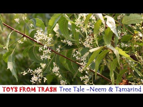 tree tale neem and tamarind english  tree tale neem and tamarind english