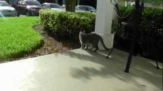 Как домашние животные переносят жару во Флориде США