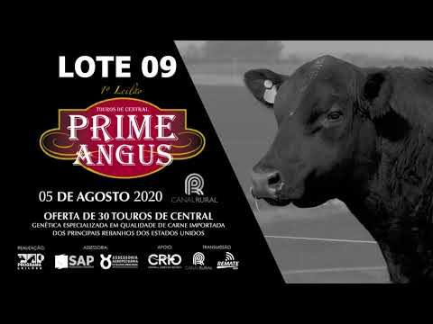 LOTE 09   BLACK OPAL TE881 SAL GROSSO Prod  Agência El Campo