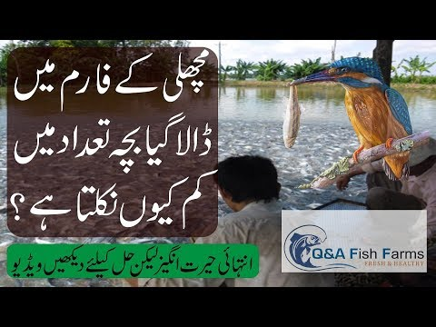 Fish Farming, How To Protect Seed From Predator, Snake, King Fisher And Others, Video 17