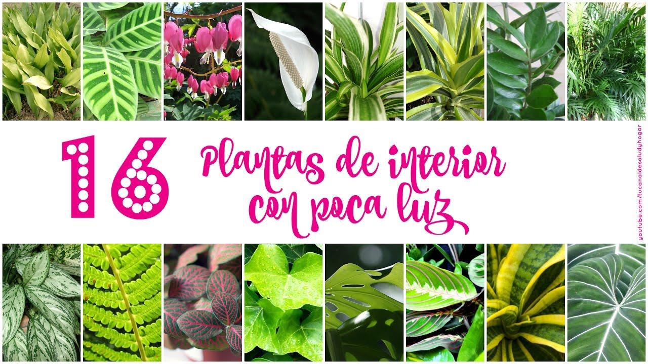 16 plantas de interior con poca luz youtube - Plantas de exterior con flor ...