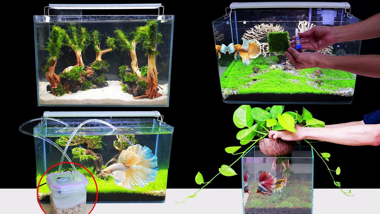 Top 3 Amazing How To Make Aquascape No Co2 At Home Ideas ...