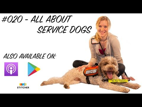 #020 - All About Service Dogs