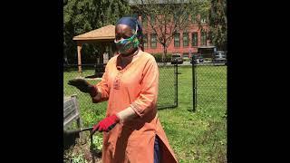 Using a Cultivator to Prep the Garden