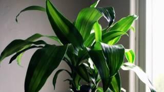 Au Revoir Simone - Lark (Official Music Video) YouTube Videos