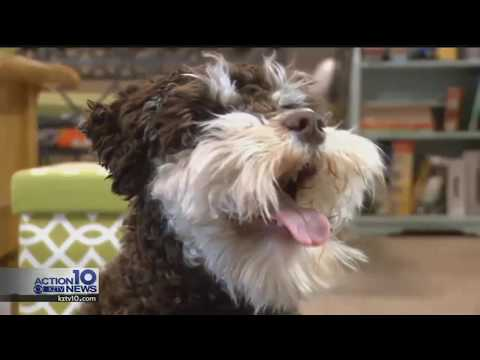 Leaving pets outdoors in freezing temps is against the law