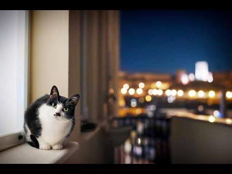 Как отучить кошку орать по ночам