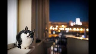 Что делать если кошка ночью не дает спать