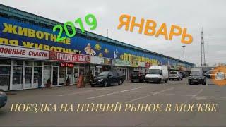 ПТИЧИЙ РЫНОК МОСКВА. ЗИМА 2019