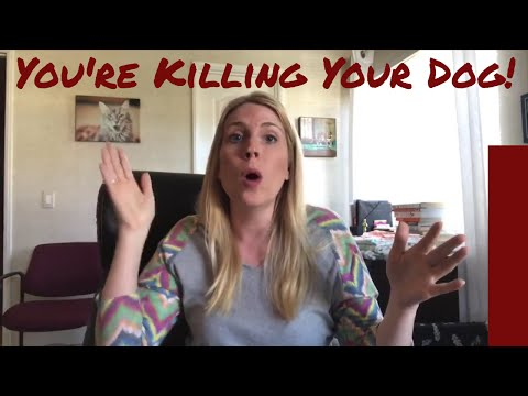 You're Killing Your Dog - Pet Food linked to Canine Cancer