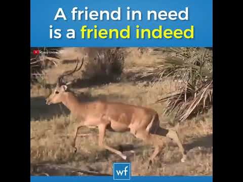 a friend in needs a friend indeed a friend with weed is better  watch full please