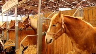 Salon du Cheval de Paris, horses, cavalos