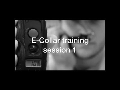 Ecollar training #1 with America's Canine Educator-