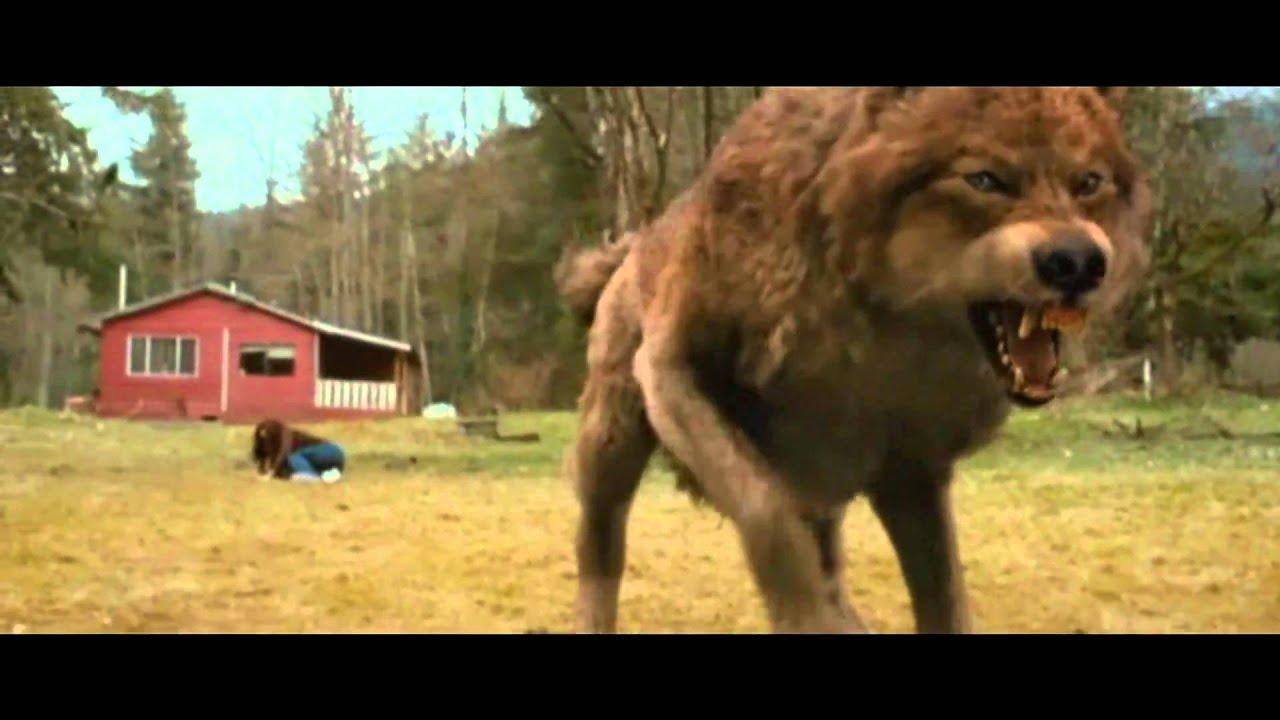 Vukovi - Animal