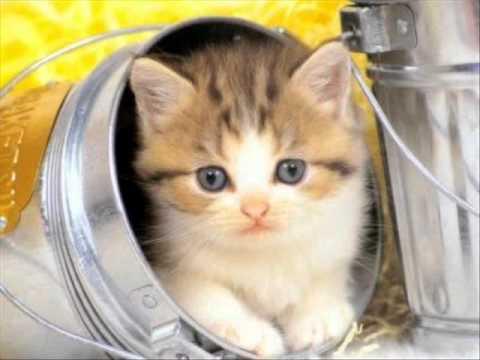 Youtube - Image d animaux gratuit ...