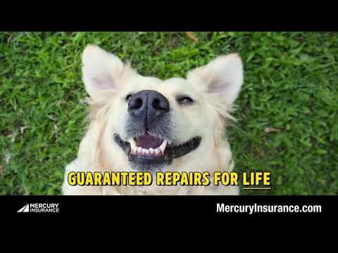 Mercury Insurance…and puppies!