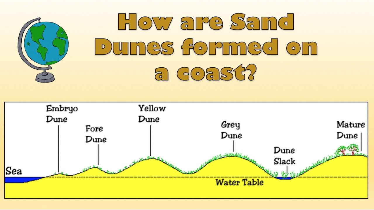 How are Sand Dunes formed on a coast? - Labelled diagram and explanation