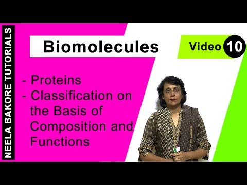 Biomolecules - Proteins - Classification on the Basis of Composition and Functions