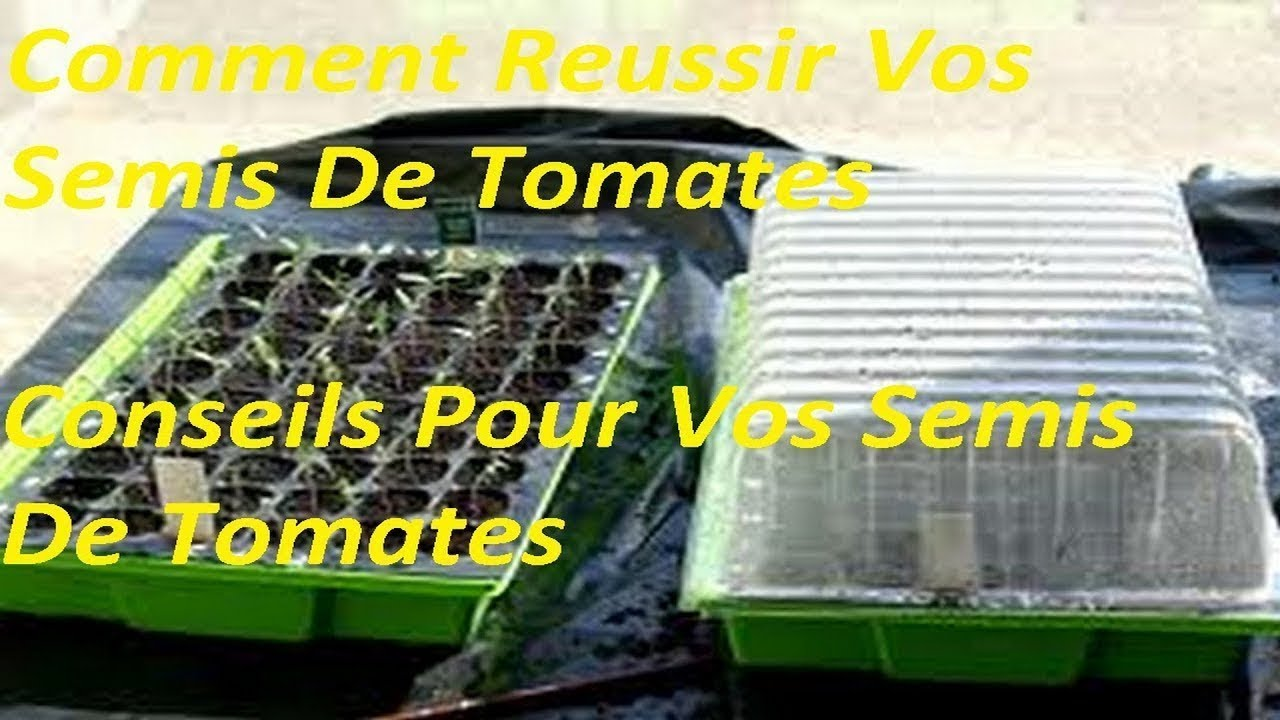 comment r ussir ses semis de tomates conseils pour vos semis de tomates youtube. Black Bedroom Furniture Sets. Home Design Ideas