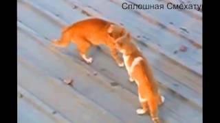 самые смешные драки котов такого еще не видели