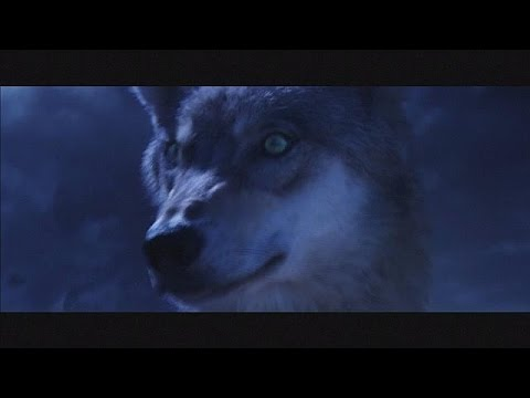 """Wolf Totem"": Annaud in China - cinema"