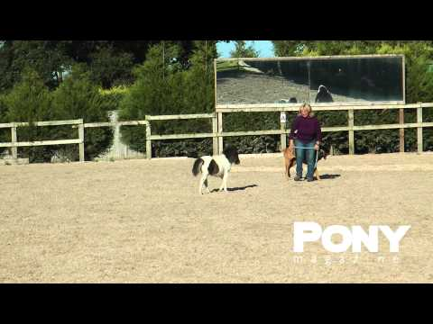 Meet Dottie the miniature foal! | PONY Magazine