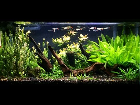 Overstocked Filigree Glass Bloodfin Tetras