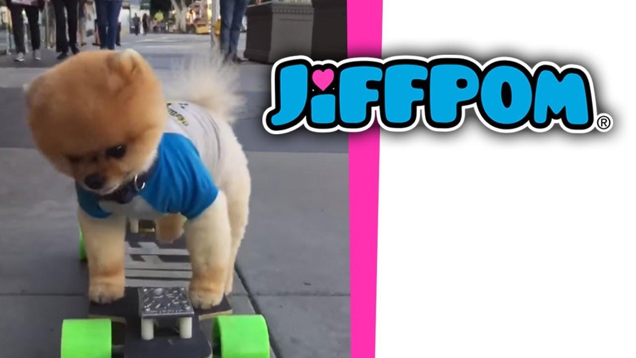 Jiffpom On A Skateboard Youtube