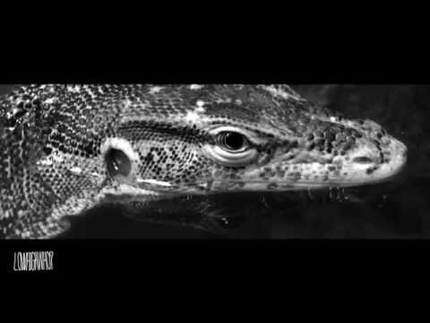 《MV》PUBLIC ENAMAY - REINCARNATED feat. QOLE