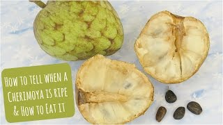 How to tell when a Cherimoya is ripe & how to eat it!