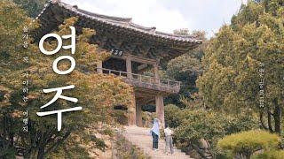 INFP가 번아웃을 이겨내는 방법  feat. 경상북도…
