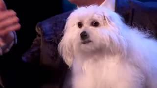 كلب يتكلم في برنامج المواهب !!!!! screenshot 1