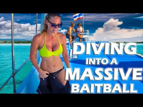 Diving a Massive Bait Ball in Koh Phi Phi - S3:E13