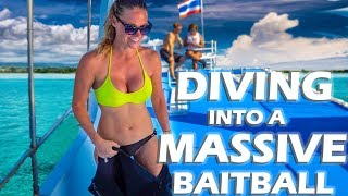 diving-a-massive-bait-ball-in-koh-phi-phi-s3-e13