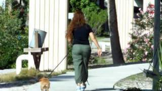 Dog Training Norwich Terrier Baxter
