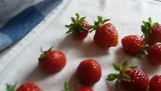 SUEMITSU & THE SUEMITH - 100 Strawberries