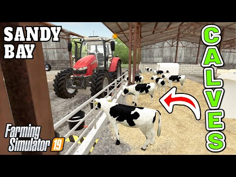 CALVES ON THE FARM FOR THE FIRST TIME EVER!  | Sandy Bay Farming Simulator 19 - Episode 16
