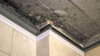 Пластиковые панели на потолке(Монтаж потолочных плинтусов и панелей, на каркас,или как сделать прилично из комплектующих очень бюджетно..., 2014-10-01T01:25:24.000Z)