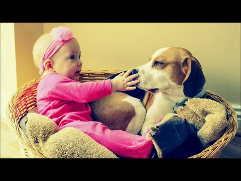 Dog and Baby Learning How to Love