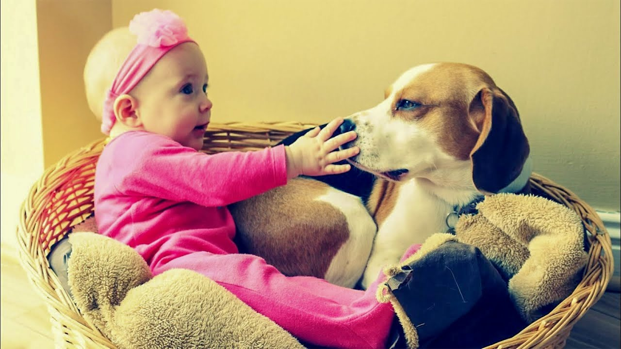 Do Dogs Like Blankets