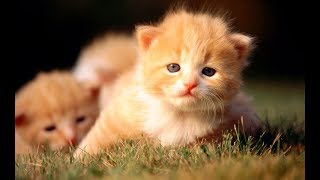 Cute Is Not Enough 😍 Funny Cats and Dogs Videos Compilation 2018 #13